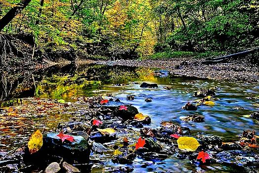 Frozen in Time Fine Art Photography - Colorful Autumn Leaves and Water