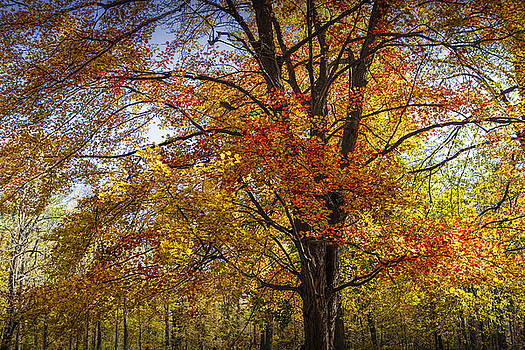 Randall Nyhof - Colorful Autumn Tree in Southwest Michigan by Gun Lake