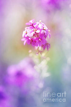 Colorful blooming... by LHJB Photography