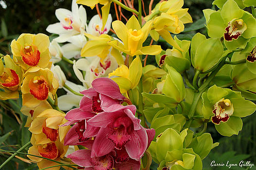 Colorful Bunch by Carrie Gallop