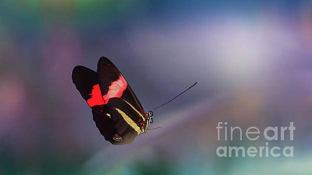 colorful Butterfly by Franziskus Pfleghart