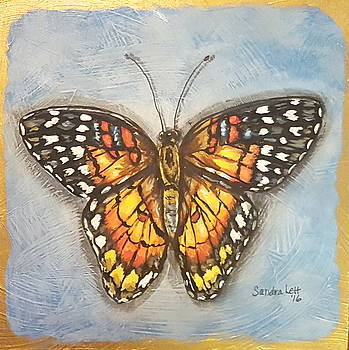 Colorful Butterfly Study by Sandra Lett