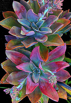Colorful Cactus by Dean Crawford Jr