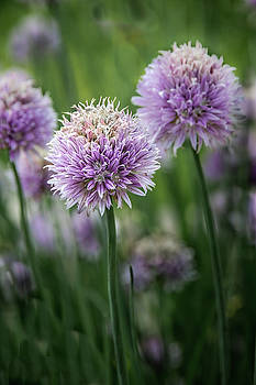 James Woody - Colorful Chives