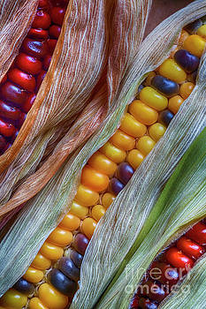 Colorful Corn 2 by Veikko Suikkanen