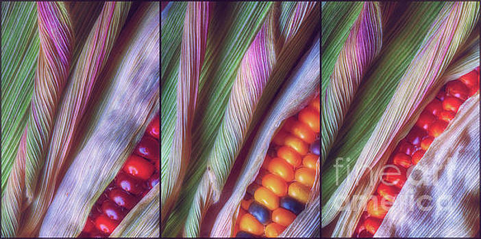 Colorful Corn Trio by Veikko Suikkanen