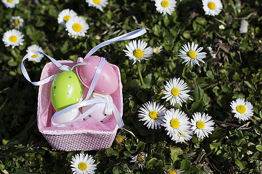 Newnow Photography By Vera Cepic - Colorful Easter eggs in pink basket on grass full of white flowe