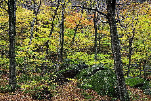 Reimar Gaertner - Colorful Fall forest at Smugglers Notch State Park with moss cov