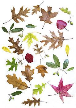 Elena Nosyreva - Colorful fall leaves