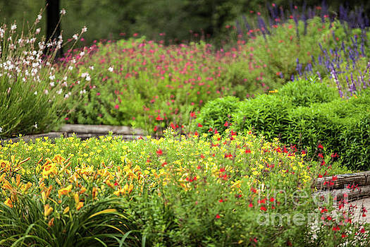 Colorful Garden by Iris Greenwell