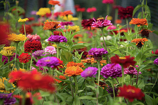 Colorful Garden by Zina Zinchik