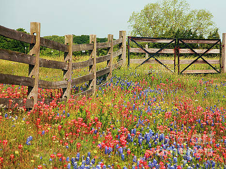 Colorful Gate by Charles McKelroy