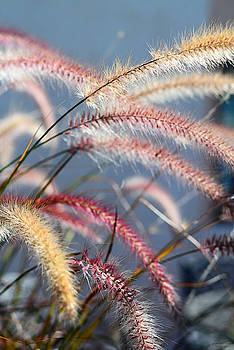 Sharon Cummings - Colorful Grass Art - In The Summer Light - Sharon Cummings