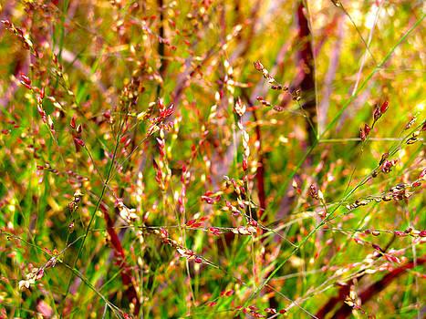 Colorful Grass by Lynn Harrison