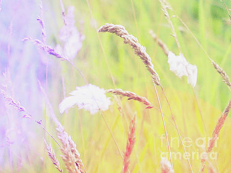 Colorful grasses by Natasha Lovell