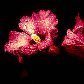 Colorful Hibiscus Flower by Debra Lynch