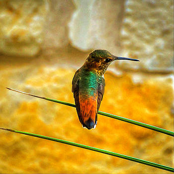 Colorful Hummingbird by Roger McBee