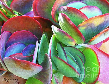 Colorful Kalanchoe by Mariarosa Rockefeller