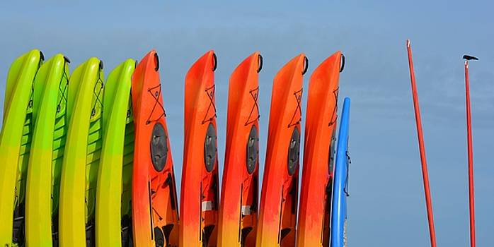 Patricia Twardzik - Colorful Kayaks All in a Row