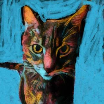Colorful kitty cat starting into your soul in the dark of night just after tossing something of the table by MendyZ