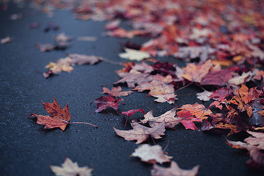 Colorful Leaves by Amanda Wakefield