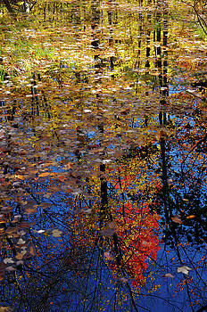 Reimar Gaertner - Colorful leaves floating in a still pond reflecting trees in the