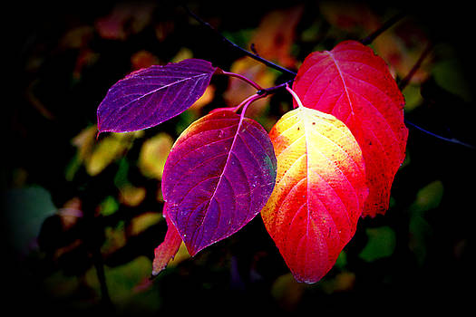 Colorful Leaves by Lynn Bawden