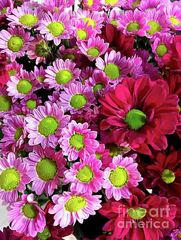 Colorful Mums 2 by Jasna Dragun