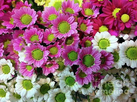 Colorful Mums by Jasna Dragun