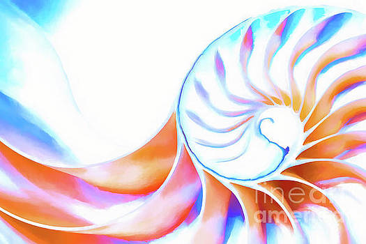 Colorful Nautilus by Joe Geraci