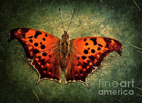 Colorful Orange Butterfly by Photo Captures by Jeffery