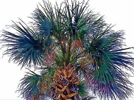 Colorful Palmetto Tree by Joey OConnor