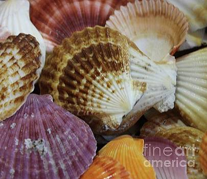 Paulette Thomas - Colorful Sea Shells