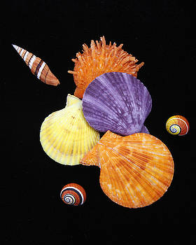 Colorful Shells II by Kelly S Andrews