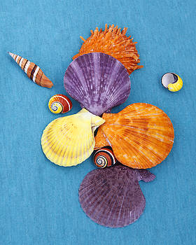 Colorful Shells by Kelly S Andrews