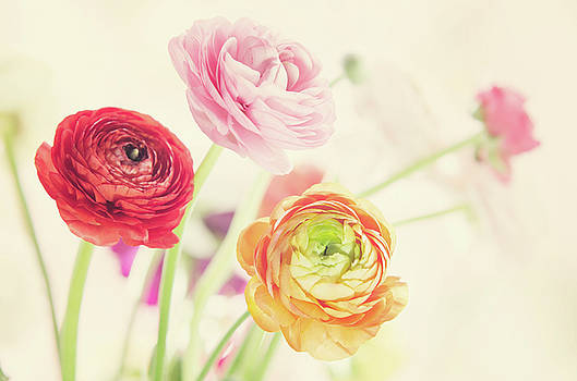 Colorful Spring by AugenWerk Susann Serfezi