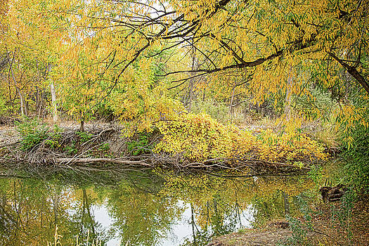 Colorful Stream Banks Reflections by James BO Insogna