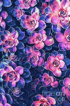 Colorful Succulent Plants by Phil Perkins