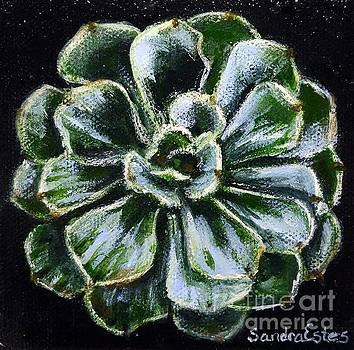 Colorful Succulent by Sandra Estes