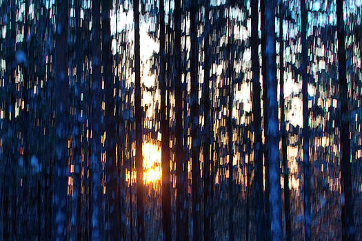 Colorful sunset in a pine forest - motion blur by Intensivelight