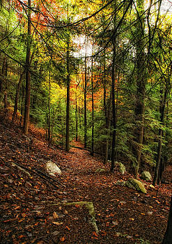 Colorful Trail by Earl Carter
