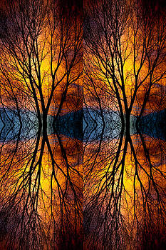 James BO Insogna - Colorful Tree Branches Abstract  Four