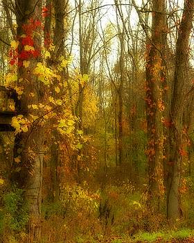 Colorful Trees In A  Fall Forest by Gothicrow Images
