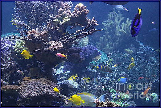 Colorful Tropical Fish and Coral Reefs by Dora Sofia Caputo Photographic Art and Design