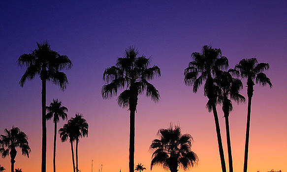 James BO  Insogna - Colorful Tropical Palm Tree Sunset
