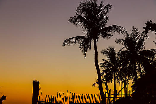James BO Insogna - Colorful Tropical Paradise Sunset Silhouettes