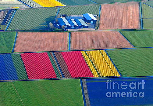 Colorful Tulip Farms, Holland by Akshay Thaker