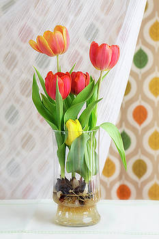 Colorful Tulips and Bulbs in Glass Vase by Susan Gary