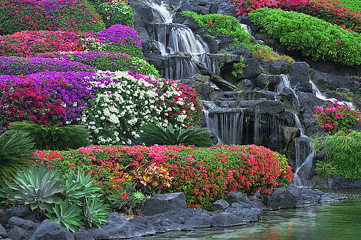 Colorful varieties of Bougainvillea bloom on the grounds of the Grand Hyatt Hotel. by Larry Geddis