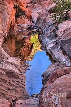 Adam Jewell - Colorful Zion Reflections